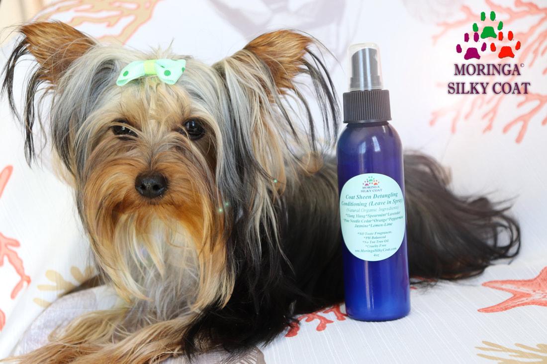 Moringa Silky Coat Dog Natural Grooming Products Yorkie Shampoo