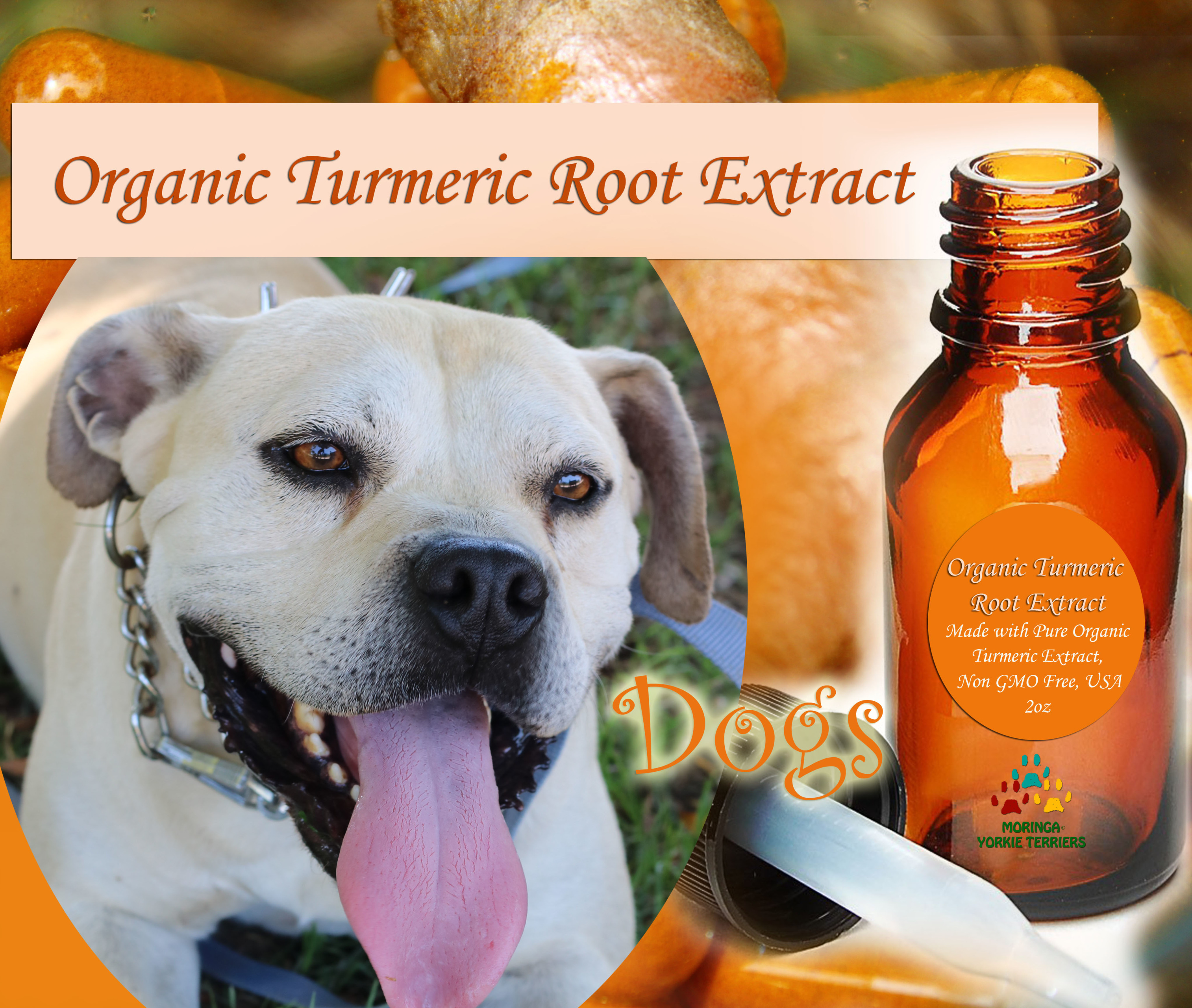 Turmeric Extract For Dog + (Alcohol-FREE)